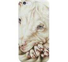 White Pit Bull Dog Drawing iPhone Case/Skin