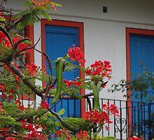 colors in the tropics - colores en la zona tropical by Bernhard Matejka