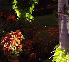 colors in the tropics II - colores en la zona tropical by Bernhard Matejka