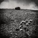 Hut by Nikki Smith
