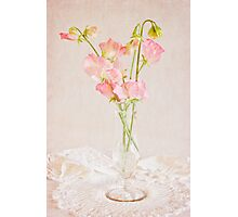 Old Fashioned Sweet Peas Photographic Print