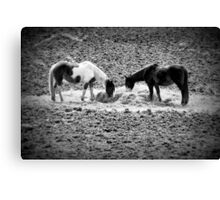 Horses in Hay equine artwork black and white art Canvas Print
