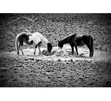Horses in Hay equine artwork black and white art Photographic Print