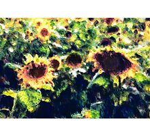 Sunflowers No. 1 Photographic Print