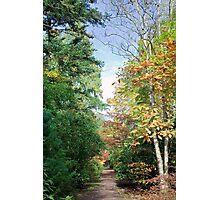 Forstbotanischen Garten Photographic Print