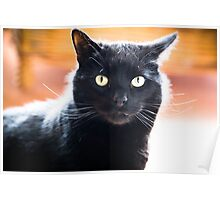 House Panther Poster