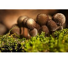 brown bunch Photographic Print
