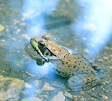 Frog by Chelsea Wildner