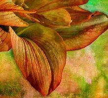 Sunny amaryllis on canvas by Celeste Mookherjee