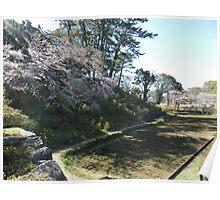 Cherry Blossom Scene Poster