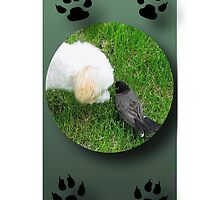 ☀ ツ OK.. I'LL TWEET YOUR MESSAGE TO THE REST OF THE CANINES IPHONE CASE☀ ツ by ╰⊰✿ℒᵒᶹᵉ Bonita✿⊱╮ Lalonde✿⊱╮