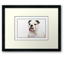 BULLDOG LOVE Framed Print