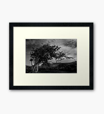 Wild Wales Framed Print
