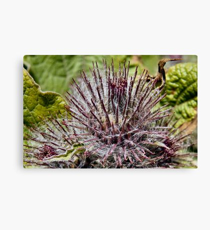 THORNY PLANT   Canvas Print