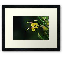 "grevillea ""goldrush"" #3 Framed Print"