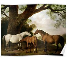 Two Shafto Mares and a Foal Poster