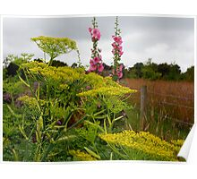 Fennel & Hollyhocks Poster