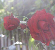 Red Flower Sun Haze by mdench