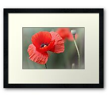 Them There Eyes... Framed Print