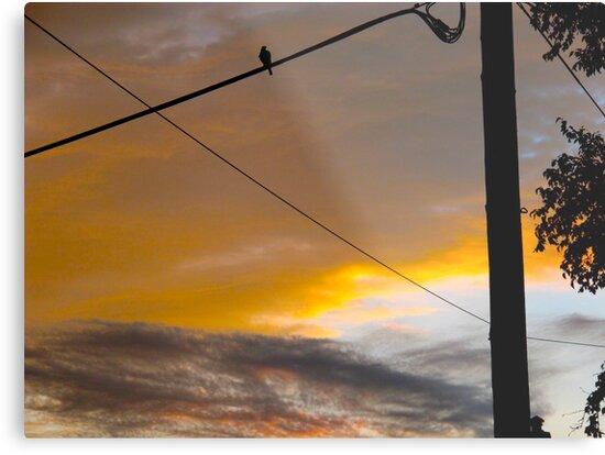Dusk bird tweets into silence by MarianBendeth