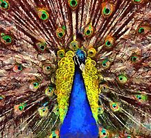 Peacock Beauty and Wonders of Nature by Alwin Red