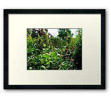 Winding gardens Framed Print