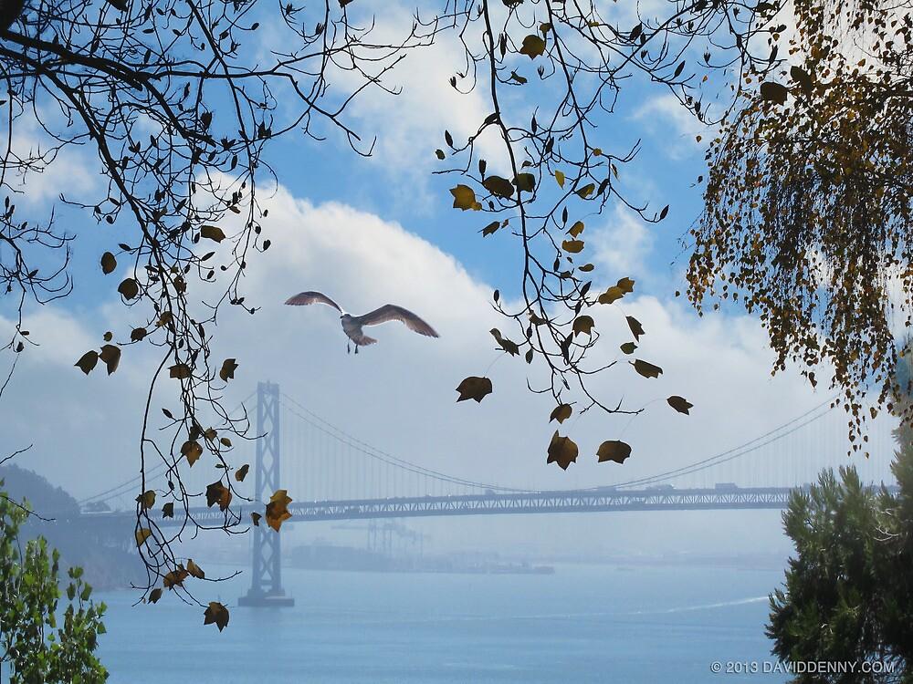 Bay Bridge and the Gull by David Denny