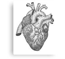 Anatomical Heart Ink Illustration Canvas Print
