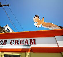 The Ice Cream Seagull by Andy F