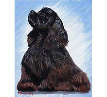 Cocker Spaniel Dog Portrait Photographic Print