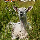 Singing Sheep Birthday Card by Moonlake