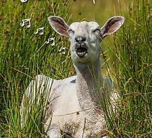 Singing Sheep Birthday Card by Moonlake
