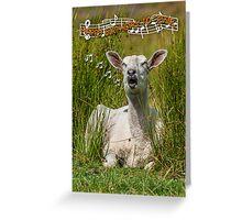 Singing Sheep Birthday Card Greeting Card