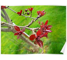 Red Tree With Grass Poster