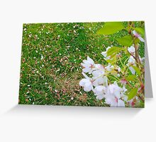 Blossoms In The Spring Greeting Card