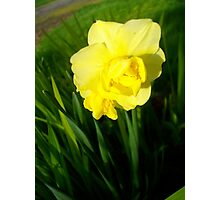 Daffodils In The Spring Photographic Print