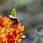Iowa Bugs and Insects by Keala