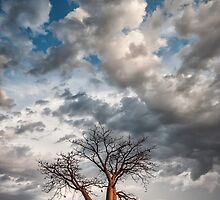Under a Restless Sky by Mieke Boynton