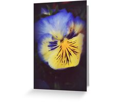 Pansy Glow Greeting Card