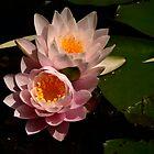Water Lilies by Joanne  Bradley