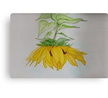 Lori's Sunflower Canvas Print
