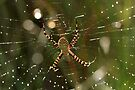 Bokeh Spider by Michelle Cocking