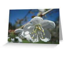 Spring Time Blossoms Greeting Card