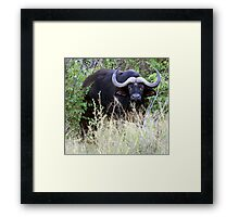 Buffalo!..... where? Framed Print