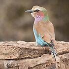 Lilac Breasted Roller by Vickie Burt