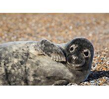 Seal Photographic Print