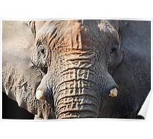 Elephant up close Poster