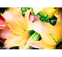 Pretty Lilly Photographic Print