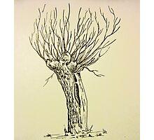 Dutch Willow Photographic Print