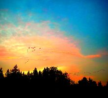 Geese Over Marymoor by kchase